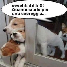 Funny dogs with 20 pics like tongue out puppy. Some pictures of funny dogs with captions. Funny Animal Pictures, Dog Pictures, Funny Animals, Cute Animals, Baby Animals, Humor Animal, Animal Memes, Funny Cute, The Funny