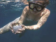 Если вы боитесь погружаться с аквалангом на глубину, попробуйте сноркелинг - плавание с маской и трубкой. Это замечательное развлечение для всей семьи, от самых маленьких до самых старших.