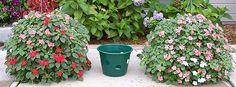 cestas de suspensão - simplesmente a cesta de suspensão melhores disponíveis