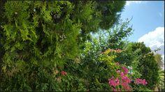 #skylovers #sky #clouds #azzurro #verde #nature
