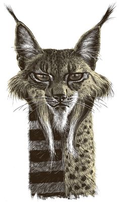 Great Animal Drawings by Ricardo Martinez