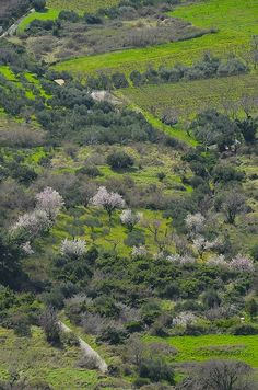 Travel Inspiration | Lush Green Fields and Blooming Flowers in Klis, Croatia