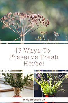 13 Ways To Preserve Fresh Herbs When To Plant Potatoes, Planting Potatoes, Herb Garden Design, Diy Herb Garden, Herbs Garden, Vegetable Garden, Gardening For Beginners, Gardening Tips, Preserve Fresh Herbs