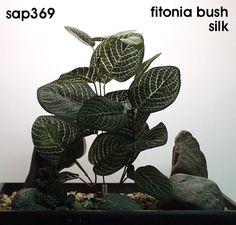 fitonia bush silk.  freshwater aquarium or reptile environment.