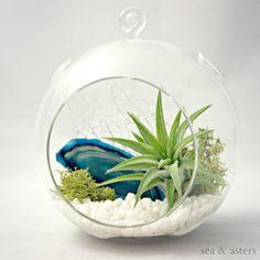 Turquoise Agate Mineral Air Plant Terrarium by seaandasters,