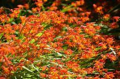 California Flora Flowers Japanese Tea Garden San Francisco Travel