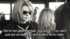 We are not giant pandas.
