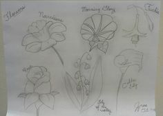 Flowers #drawing #morningglory #rose #lilyofthevalley #callalily #fuchia #narcissus #prettyflowers