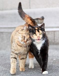 *These two feral cats are spotted on a University campus in Shanghai. They follow each other wherever they go. They share food and warmth and lean on one another for love and comfort according to Jianfu. There is not a moment that they aren't seen together. What an inspiring pair!
