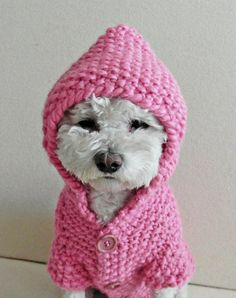 Dog Pink Hoodie Sweater Hand Knit Pet Clothing Small Dog Clothes Front Buttons Handmade Winter Dog Sweater by BubaDog Crochet Dog Clothes, Crochet Dog Sweater, Dog Sweater Pattern, Dog Pattern, Small Dog Clothes, Puppy Clothes, Ship Dog, Dog Sweaters, Pets