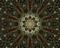 PIF Kaleidoscope made from Cedar Tree photograph by LeesWhimsy, $0.20