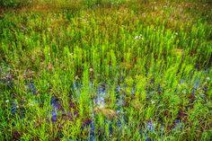 Prairie Oil – Nature Photography, Rural, Summer, Prairie, Iowa, Fine Art, Home Decor