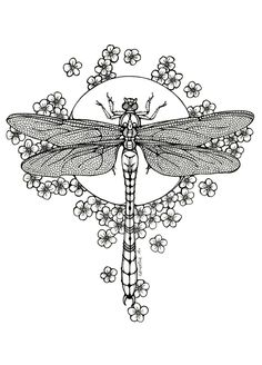 Dragonfly - lineart by CathM on DeviantArt