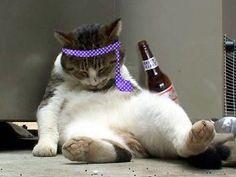 「飲ん だ くれ 猫」の画像検索結果
