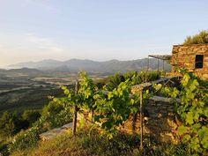 Location vacances gîte Rapale: Pagliaghju di Cannetu   vue saint Florent