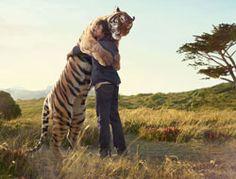 images - tiger hug |