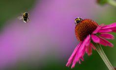 by Aziz Nasuti on Beautiful One, Landing, Sky, Explore, Photography, Travel, Animals, Blog, Heaven