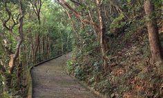 Lazy Hikes: Wan Chai Gap Road to Wong Nai Chung Road