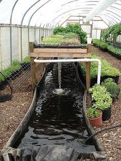 aquaponic garden. Fish+garden