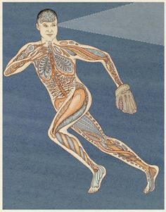 The imaginary organs of athletes by Katie Scott