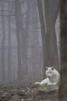 This is how I feel.All of the time!!!!1 My wolf taught me this. That to be in the quiet center is where the peace is.