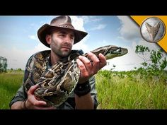Giant Snake of the Everglades - The Invasive Burmese Python - YouTube