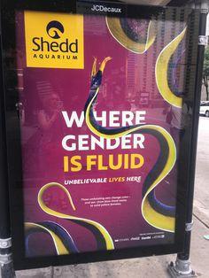 Shedd Aquarium, Color Change, Gender, Messages, Children, Life, Kids, Texting, Text Posts