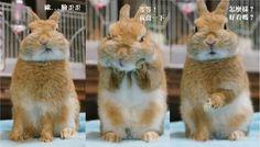 早上起來臉睡歪了 萌兔兔短手捧雙頰「我喬一下啊」 | ETtoday寵物動物新聞 | ETtoday 新聞雲