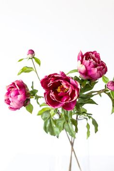 Create a stunning bridal bouquet with affordable fuchsia peonies from afloral.com. #fakeflowers #fauxflowers #budgetwedding Artificial Peonies, Artificial Flower Arrangements, Vase Arrangements, Wedding Flower Decorations, Diy Wedding Flowers, Fake Flowers, Silk Flowers, Perfect Pink, Peony Flower