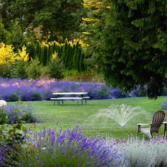 Lavender Farm Near Seattle   Woodinville Lavender.  Buy replacements lavender for hedge here next summer.