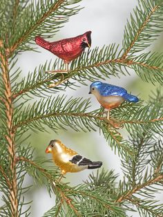 Mini Songbird Glass Clip Ornaments, Set of 3 Christmas Tree Trimming, Bird Ornaments, Gardening Supplies, Glass Birds, Christmas Traditions, Vintage Christmas, Christmas Decorations, Holiday, Animals