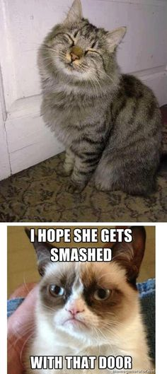 Grumpy cat (part 2) | Funny Grumpy cat memes