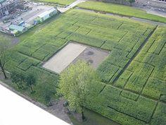 Green . maze