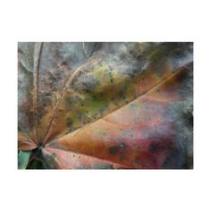 Maple leaf photography Autumnal study autumn leaf photo fall leaf fine... ($23) ❤ liked on Polyvore featuring home, home decor, wall art, abstract, sumertadesigns, photographic wall art, abstract wall art, photo wall art, fall home decor and abstract home decor