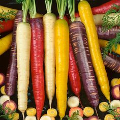 Organic Carrot, Rainbow Mix