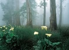 The Hogsback lilies in the mist Holiday Places, Nature Tree, Places Of Interest, African Beauty, Where The Heart Is, Places To See, South Africa, The Good Place, Pictures