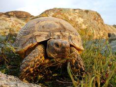 Am deschis înscrierile pentru Măcin 1. Mai, Happy Easter, Mtb, Turtle, Romania, Animals, Happy Easter Day, Animales, Tortoise
