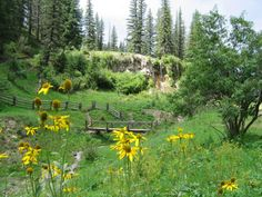 Bluff Springs on the Lincoln National Forest NM