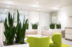 Raumbegrünung Pflanzenpflege, Interior Landscaping, Büropflanzen, Innenraumbegrünung, Großraumbüro