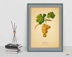 Botanical drawing art of golden Grape watercolour decor vintage antique picture wall poster home rare image cubicle decor instant download Botanical Wall Art, Botanical Drawings, Drawing Art, Art Drawings, Antique Pictures, Rare Images, Cubicle, Poster Wall, Picture Wall
