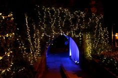 Lion in Winter Ball- Arch Way