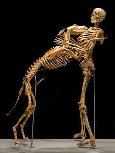 Skeletons of an Anthropologist & His Favorite Dog at the Smithsonian. I really want my body donated for science.