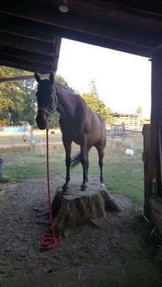 Pedestal... best,cheapest therapy for him!