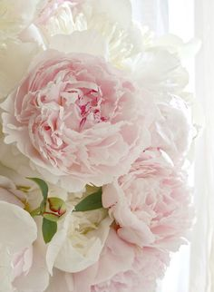 floral favorite: peonies | bright and beautiful