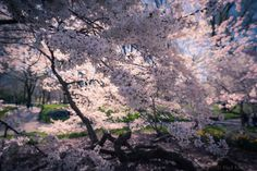Central Park heaven by Lumn8tion, via Flickr.