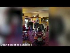 Hilarious footage shows prankster drinker riding horse into pub