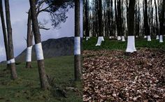 ZANDER OLSEN- 'Tree Line'