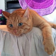 My beautiful Findus Zlatan <3 Have Fun, My Love, Cats, Creative, Animals, Beautiful, Gatos, Kitty Cats, Animaux