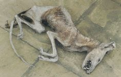 Mummified Fox