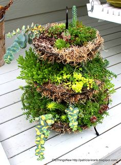 A three tiered succulent garden - so cool! By Old Things New featured on I Love That Junk